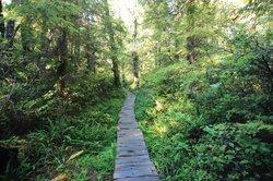 Ozette Loop Hike