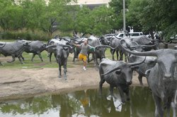 ‪Dallas Cattle Drive Sculptures‬