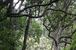 Thangamale Bird Sanctuary
