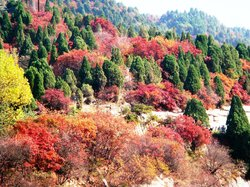 Red Leaf Valley