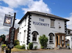 The Plucknett