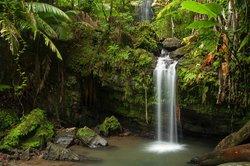 Island Walkers - El Yunque