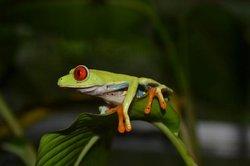 Neo Fauna CR