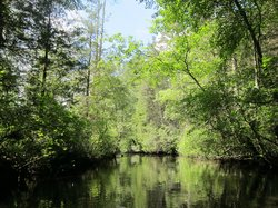 Micks Pine Barrens Canoe and Kayak Rental