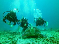 Yucatan Diving & Travel