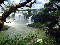 Iguazu Jungle