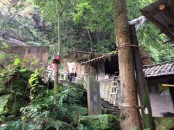 Zhaigou Bamboo