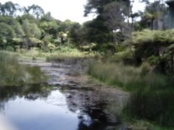 The Wetlands from the eel feeding platform