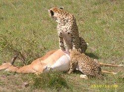 Jossy Travel - African Safaris