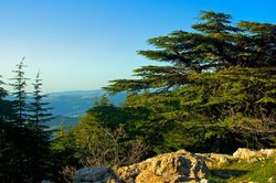 Al-Shouf Cedar Nature Reserve