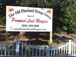 Promised Land Mangoes