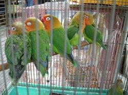 Yuanpu Street Bird Park