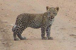 WT & Safaris Ltd - Day Tours