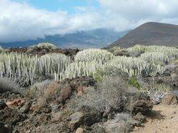 Reserva Natural Especial del Malpaís de Güímar