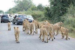Elephant Herd Tours & Safaris