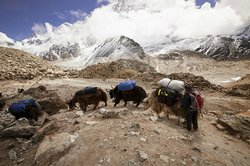 Himalayan Wonders Day Tours
