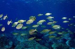 Diving Center Colera