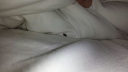 B.B. found in bed
