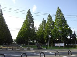 Soka Park