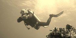 Marko's The Parrotfish Dive Center