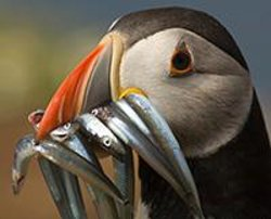 Andy Davies Photography & Video - Skomer Island Photography Workshop