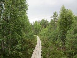 Nature Study Trail in Paaskula Bog