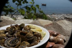 Fresh Oysters been served raw with lemon at Plimari traditional Greek tavern