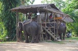 Nosey Parker's Elephant Camp - Private Day Tours