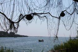 Bojana River