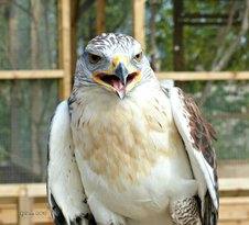 Wild Wings Birds of Prey Centre
