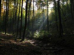 Beech Forest (Puszcza Bukowa), Szczecin