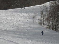 ぶなの木コースの深雪にシュプールを描く