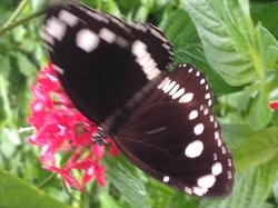 Batchelor Butterfly Farm
