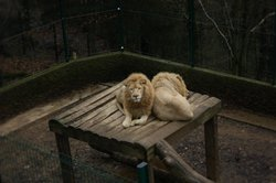 Bouillon Wildlife Park