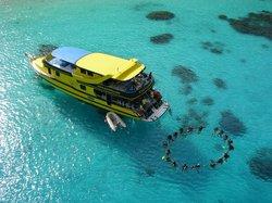 海蜜蜂潛水