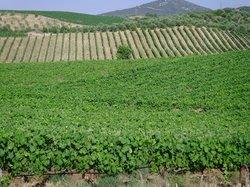 Tzivani Winery