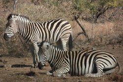 Ingrid's Safaris - Day Tour