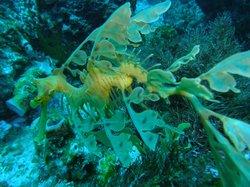 Bremer Bay Dive