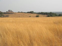 Madayipara