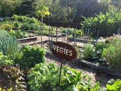 Gaia Organic Vegetable and Herb Garden