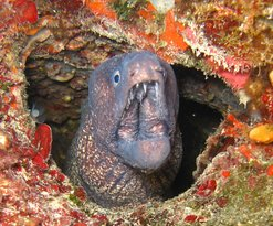Ege Octopus Dalis Merkezi