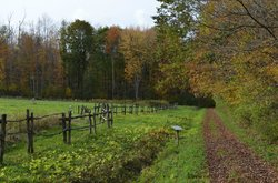 Hopkin's Memorial Forest