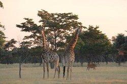 Matamba bush camp