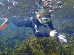 Dive Victoria Group