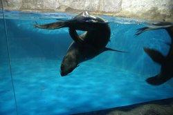 Nemo Anapa Dolphinarium