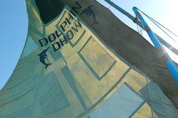 Dolphin Dhow Safaris