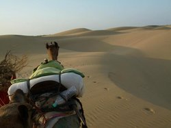 Kamals Private Camel Tour - Day Tours