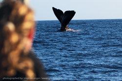 Responsible whale watching La Palma www.OceanExplorer.es