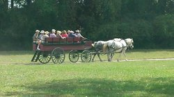 Carriage Rides Through Time