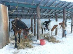 Haruka Horse Ranch